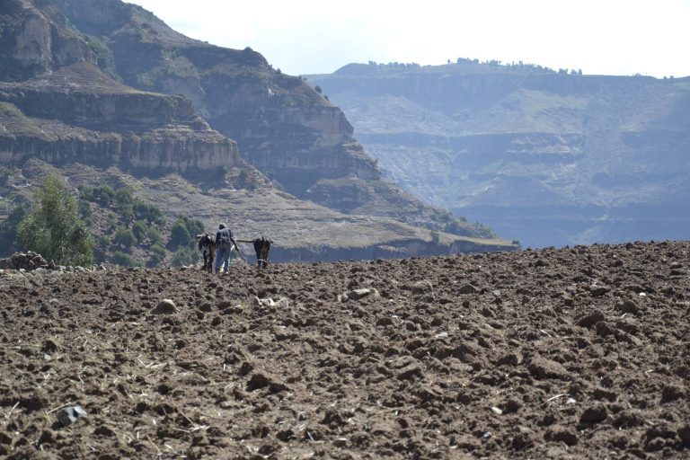 etiopia aratro